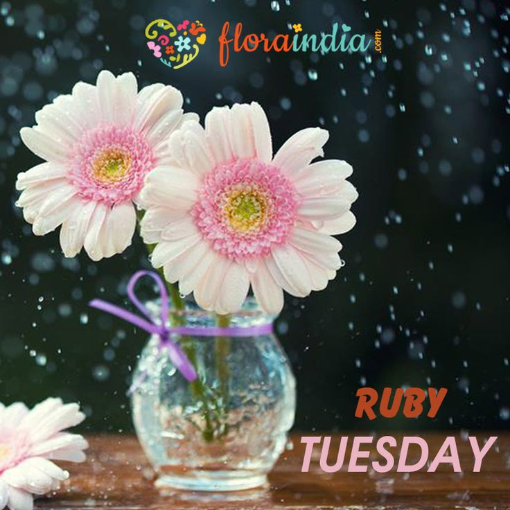 Who doesn't love a beautiful, pink GERBERA? Or a heavily-scented blush-hued rose? Or a delicate ruby lily….pink is our colour of the day! Order some lovely pink flowers today www.floraindia.com  #floraindia #flower #flowers #rose #gerbera #orchid #pink #ruby #blush #rubytuesday