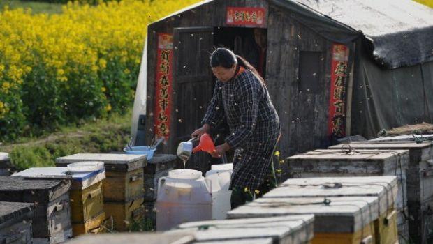 Miele italiano dimezzato: aumentano i furti di arnie