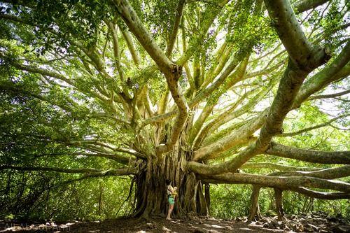 Pipiwai Trail - Maui Highlights 2014 // All About Ami