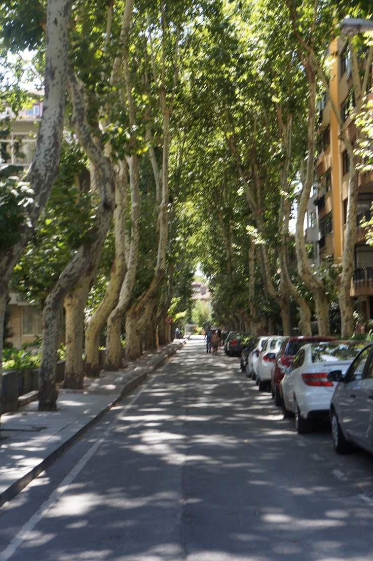 Tree lined streets Streets Pinterest Trees and Street
