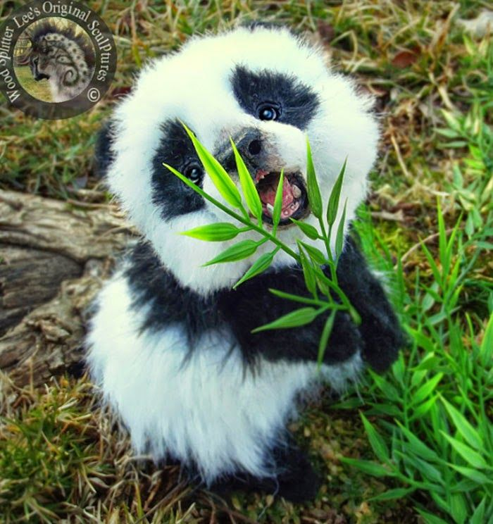 I don't even care if this isn't a real panda! It's adorable and that's all that matters...