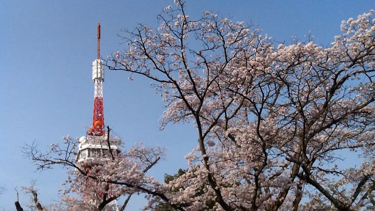 The Tower and Sakura...