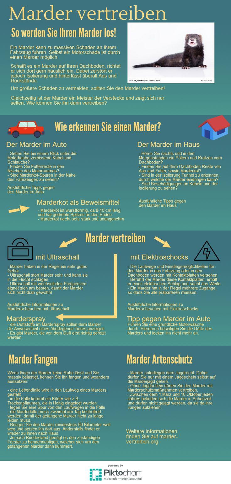 Die Infografik zeigt, wie man einen #Marder erkennen und erfolgreich vertreiben kann. Weitere Informationen findet man auch auf http://marder-vertreiben.org