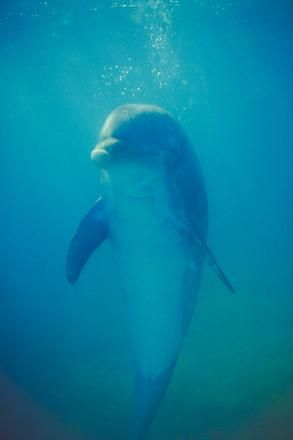 Swimming with dolphins at Runaway Bay in Jamaica is high on my list...