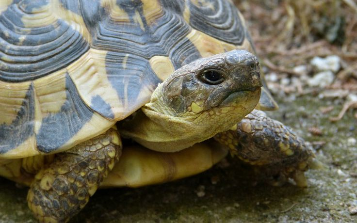 What Do Turtles Eat: Facts About The Types of Food That Turtles Eat