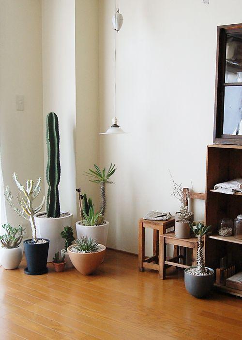 アンティーク調のインテリアとサボテンの植木の相性が◎落ち着いた大人の女性のお部屋に。