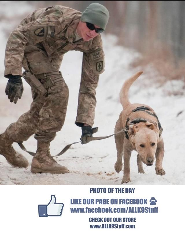 A great photo submitted by Carolyn Norment of U.S. Army Sgt. Garret Grenier and mine dog Drake at BAGRAM AIRFIELD, Afghanistan