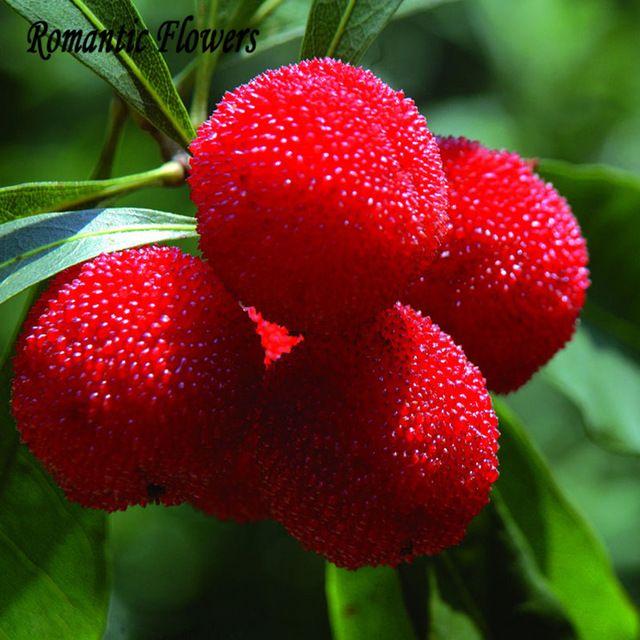 10 Partículas/Bag Arbutus Unedo Madroño Deliciosa Fruta China Semillas Sanas Y Home Garden Fácil Crecer