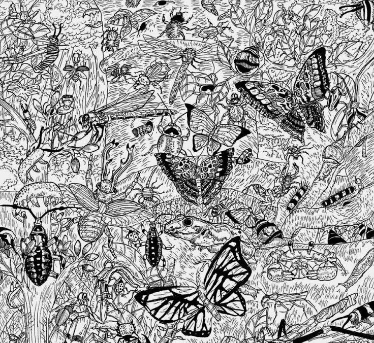 Los perfeccionistas dibujos naturales de Dušan Krtolica, un niño de 11 años