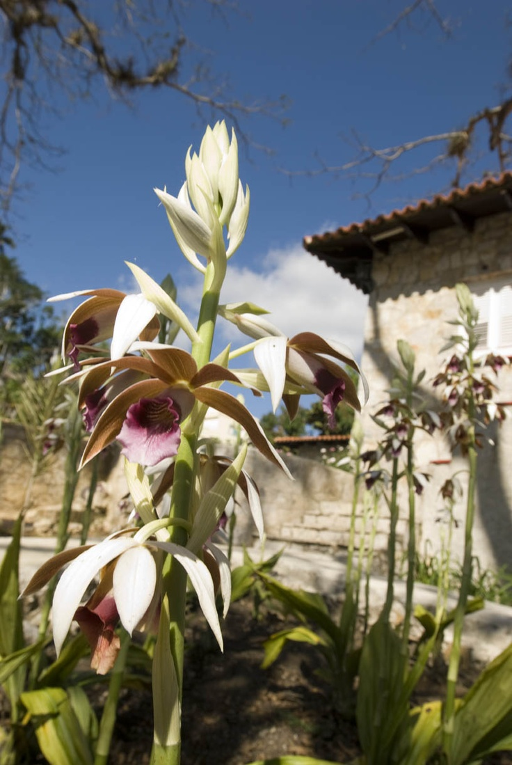 Not to be missed: In Cuba, visit the Orquideario to see more than 700 species of orchids.