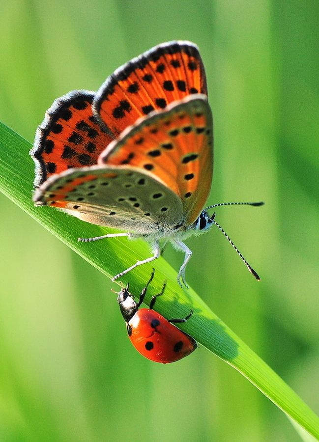 Butterfly meets lady bug by Yilmaz Uslu~~