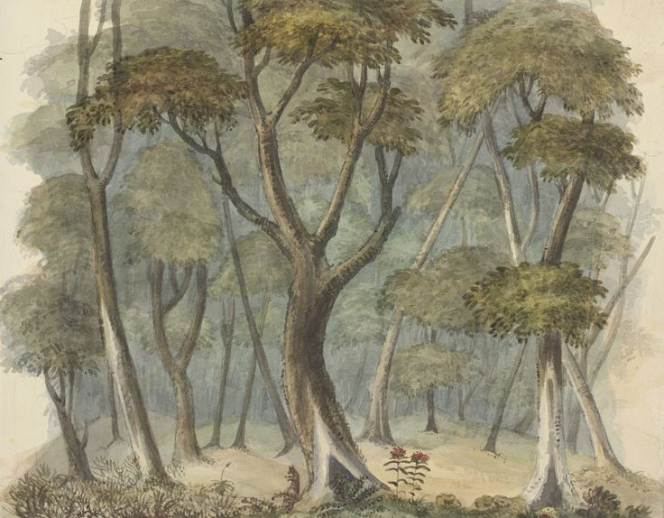 Edward Charles Close, ;'Forest landscape with kangaroo and waratah'. From his New South Wales Sketchbook: Sea Voyage, Sydney, Illawarra, Newcastle, Morpeth, c. 1817-1840, Mitchell Library, State Library of New South Wales: http://www.acmssearch.sl.nsw.gov.au/search/itemDetailPaged.cgi?itemID=861125