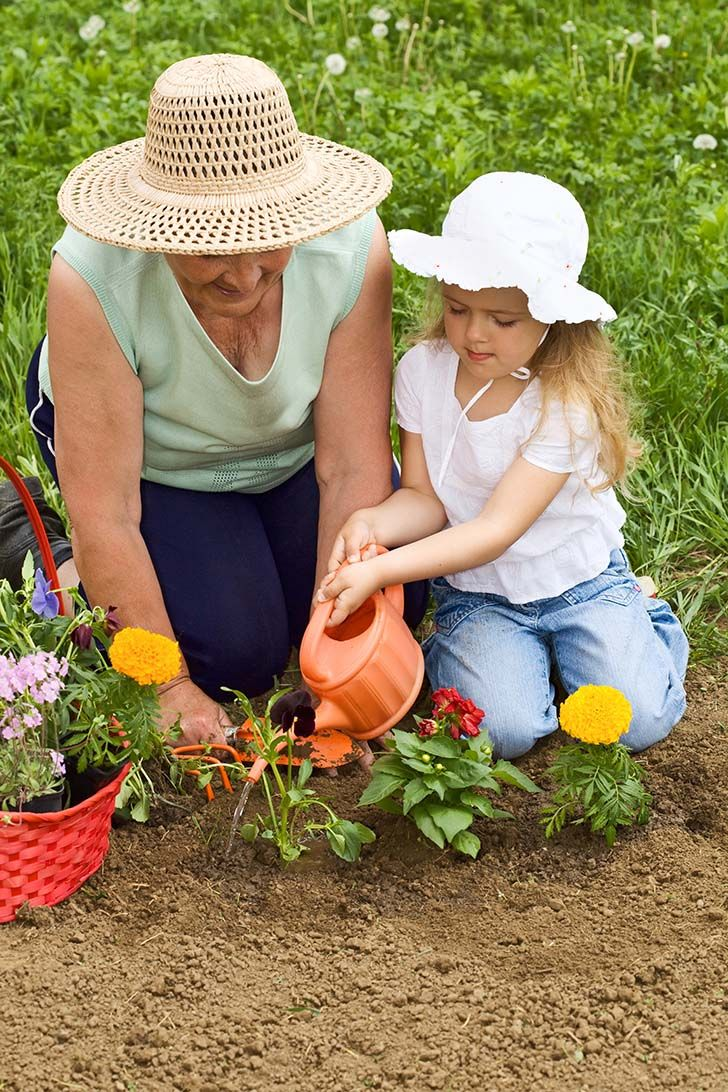 Grandmother and grandchild planting flowers together