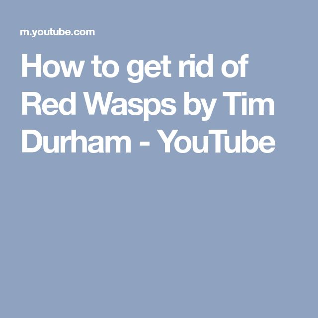 How to get rid of Red Wasps by Tim Durham - YouTube