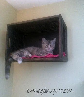 I really like the idea of using a basket or box or short trash bin or something as a cat perch.