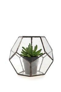 glass terrarium TypoShop @ CottonOn $39.95