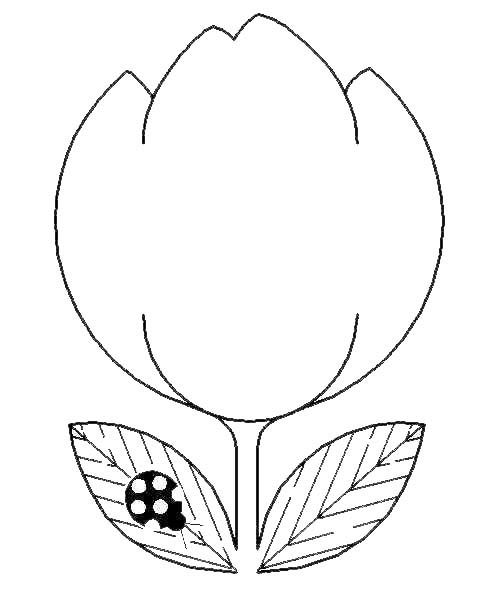 19 best flower coloring pages images on Pinterest Coloring pages - best of coloring pages for the number 19