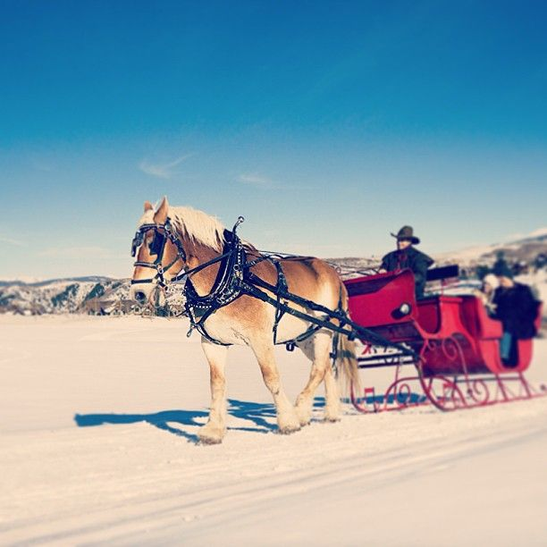 Dashing through the snow in a one horse open sleigh at @Mandy Dewey Seasons Resort Jackson Hole... #FSResorts