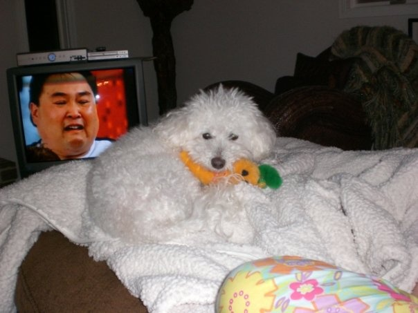 For giggles ~ Bailey, his carrot and the sumo wrestler!