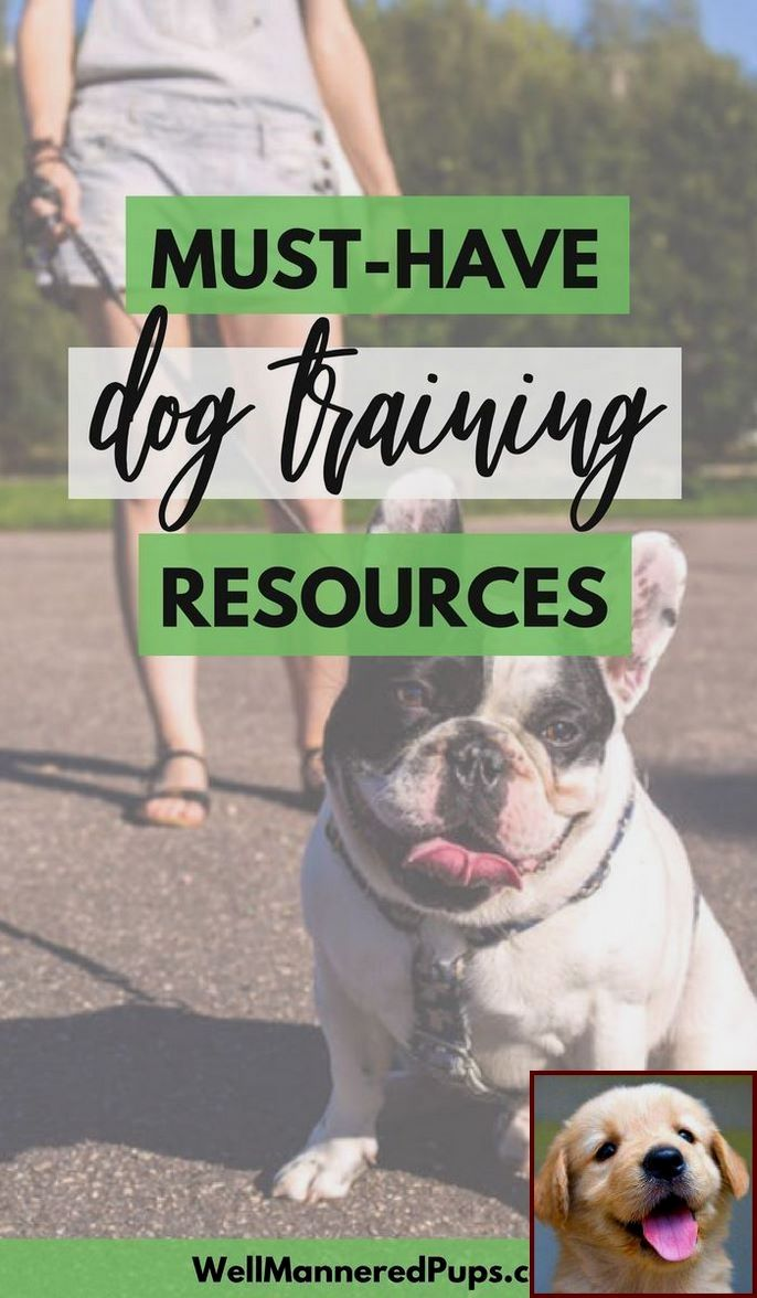 Dog Behavior Training In Your Home And Dog Training Classes Petco