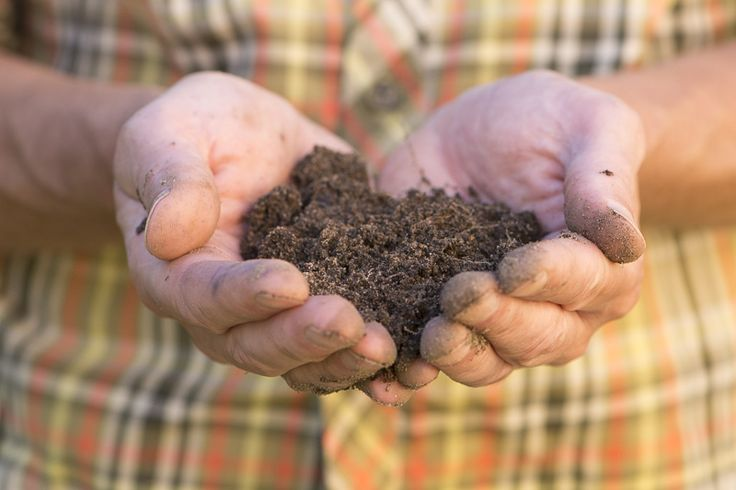 Grönsaksodlarens 8 säsonger    #odla #odling #grönsaker #trädgård #tips
