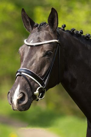 """The Premiera """"Athena"""" is a luxurious, handmade black snaffle bridle with white padding. Stunning leather, a wide soft patent leather noseband, a dazzling curved bling browband, and near invisible closures make this your perfect black and white competition bridle. Shop at www.20x60.com"""