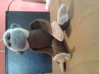 Found on 21 Jun. 2016 @ Bury, Lancashire. Small monkey found near the COOP store on Ainsworth Road in Bury. Visit: https://whiteboomerang.com/lostteddy/msg/0u28am (Posted by Ela on 04 Jul. 2016)