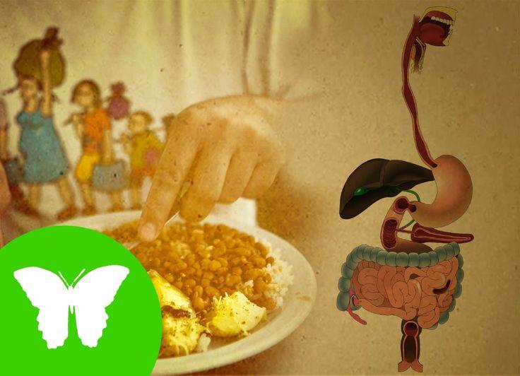 Vídeo del área de CIENCIAS NATURALES sobre el aparato digestivo, sus órganos y funcionamiento. (Resubido debido a errores de contenido) CONTENIDOS: - El apar...