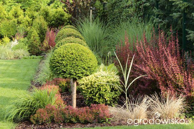 Ogród z lustrem - strona 357 - Forum ogrodnicze - Ogrodowisko