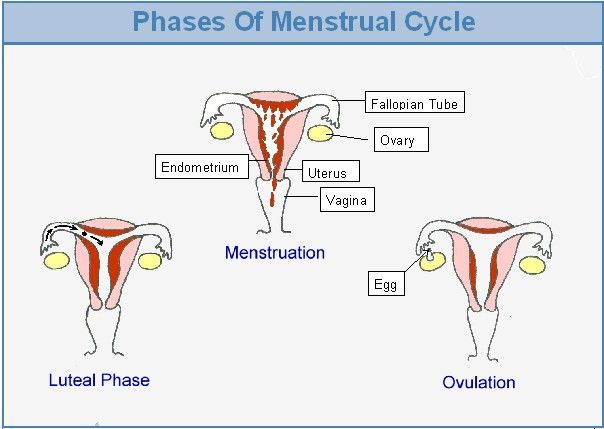 Do Guys Have A Monthly Cycle