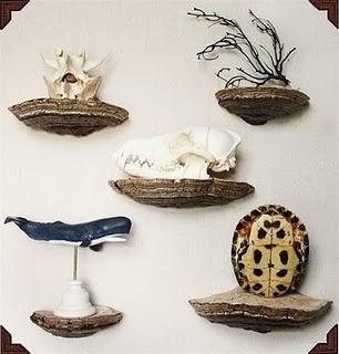 shelf fungus shelves