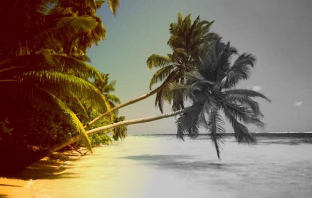 "Here you see palms that were edir with corel photo paint. I useded ""balance colours"" and ""desaturate"""