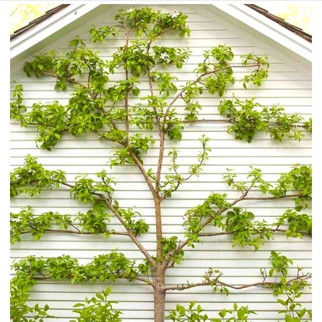 72 best Tree and shrub care images on Pinterest Landscaping