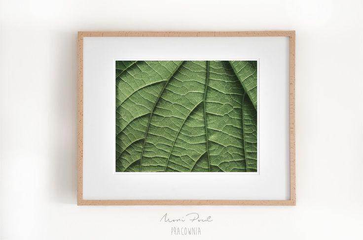 Liść lipy. 1 - MoniPoul - Fotografia kolorowa