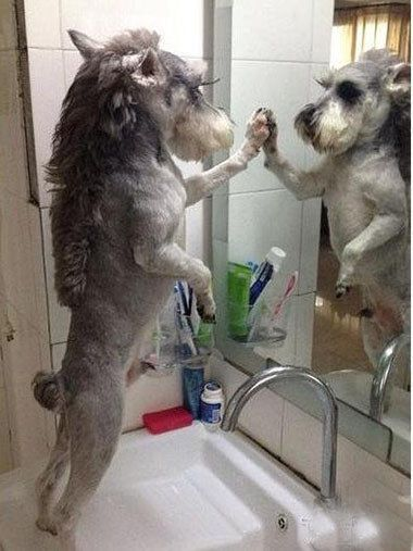 Checking out that new haircut. | 32 Dogs That Are More You Than You Even Are