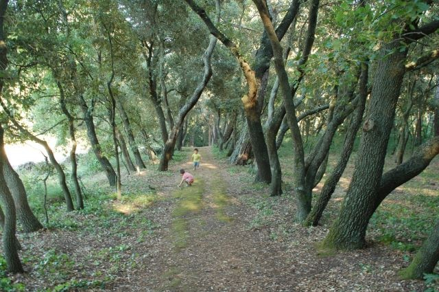 Título: Una tarde en el bosque Lugar: Palau de Santa Eulàlia, España Autora: Cinta Vidal Agulló Texto: Una tarde en el bosque