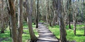 Kooloonbung Creek Nature Park and Walking Trail