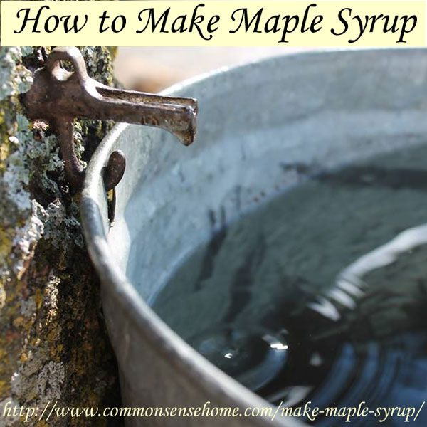 How to Make Maple Syrup - From tapping the trees and gathering the sweet sap to bottling your syrup, using it in recipes and making maple cream.