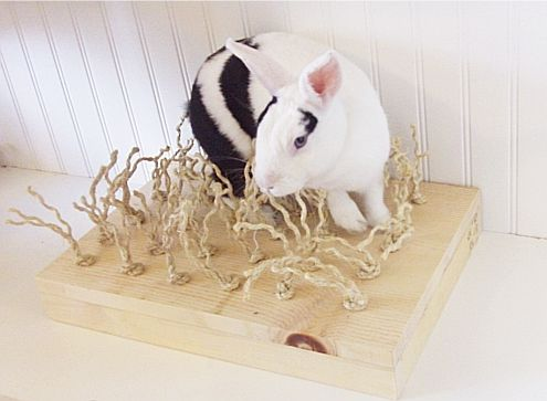 Happy Rabbit Toys - Sisal Carpet Chewing and Digging Station, $34.97 (http://www.happyrabbittoys.com/bestsellers/sisal-carpet-chewing-and-digging-station/)