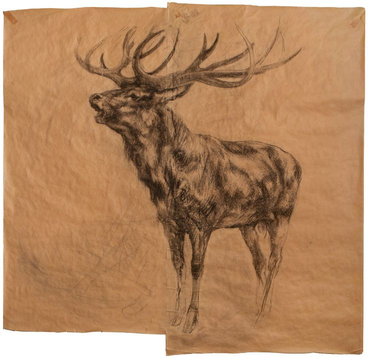 "Nicola Hicks, Stag, 2002, Charcoal on brown paper, 81"" x 80 1/4"""