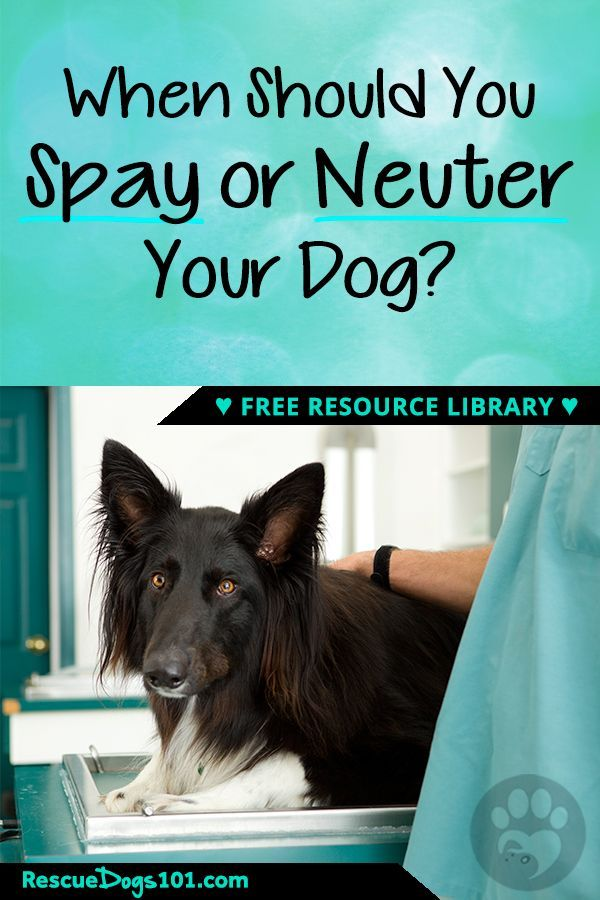 The Facts Of Spaying And Neutering Your Dog Dog Spay Dog Care Dogs