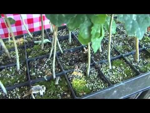 Szarvasgomba-termesztés a Fishing&Hunting TV műsorán - YouTube