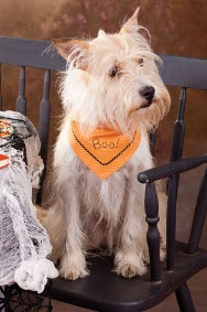 """""""Boo!"""" Dog Neckerchief - Project adapted from Stitch at Home by Mandy Shaw - Stitch Craft Create Fall 2012 Issue"""