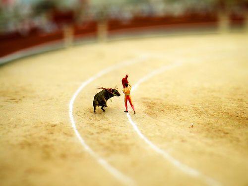 mini bullfight dutchb0y, via Flickr