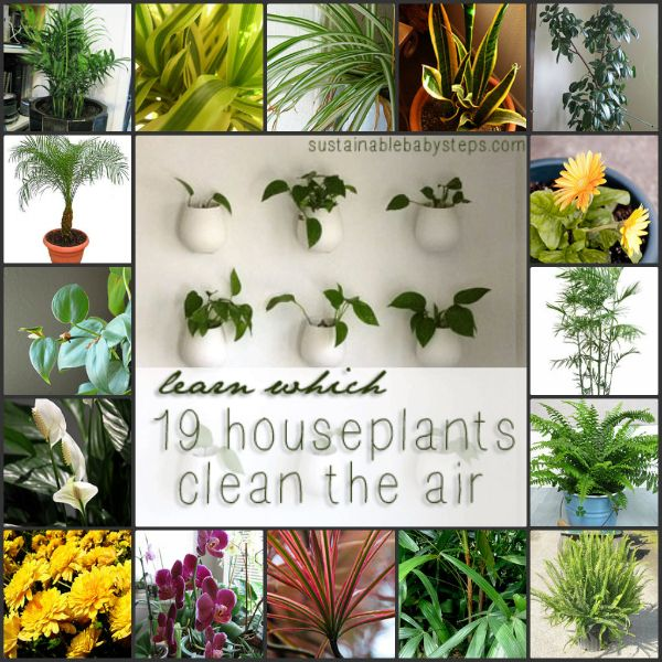 25 best images about healthy houseplants on pinterest - Healthiest houseplants fresh air delight ...