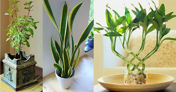 A növények számára az emberi szeretet sokkal fontosabb, mint a jó talaj vagy a megfelelő öntözés. A növények kamatostul visszaadják azt a gondoskodást, amit nyújtottunk nekik, hiszen a növények tisztítják a levegőt, és elvonják tőled a negatív energiákat, amik a nap folyamán az adott helyiségben felgyülemlenek. A növények aurája igencsak[...]