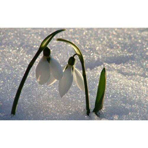 Anche nel freddo più gelido, l'amore riesce a farsi strada….