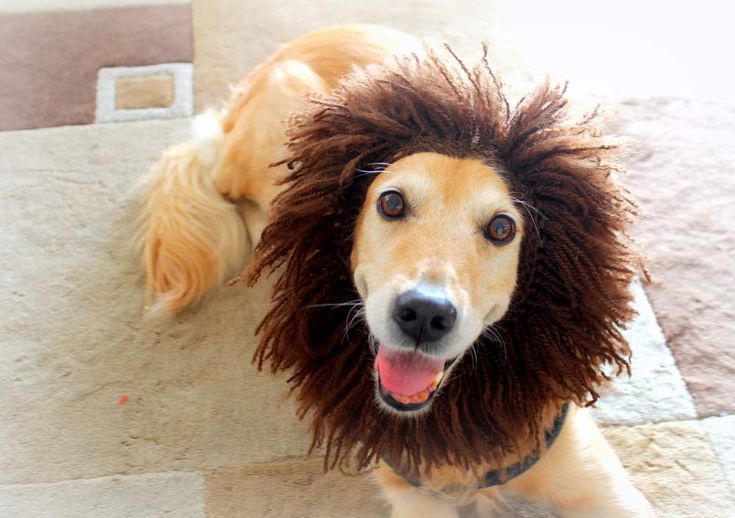Dog Hat, Lion Hat for Dogs, Dog Lion Hat, Dog Costume, Lion Costume for Dogs, Dog Lion Costume, Lion Mane for Dogs, Large Breed Dog Costume - pinned by pin4etsy.com