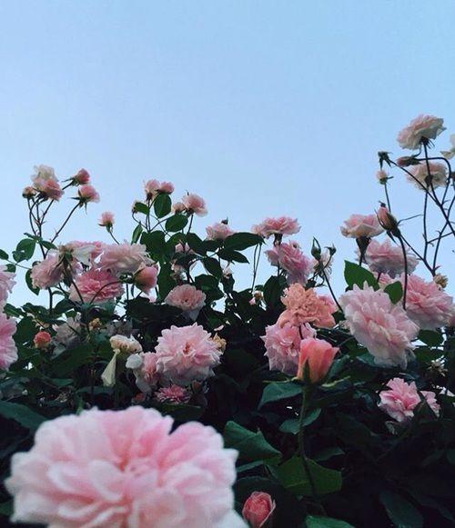 Pinterest Sebastianalbery Flower Aesthetic Flowers