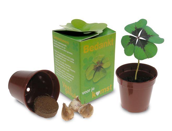Groeisetje van een echt klavertje vier in een leuk doosje.Origineel weggevertje aan uw klanten. www.geluk.com